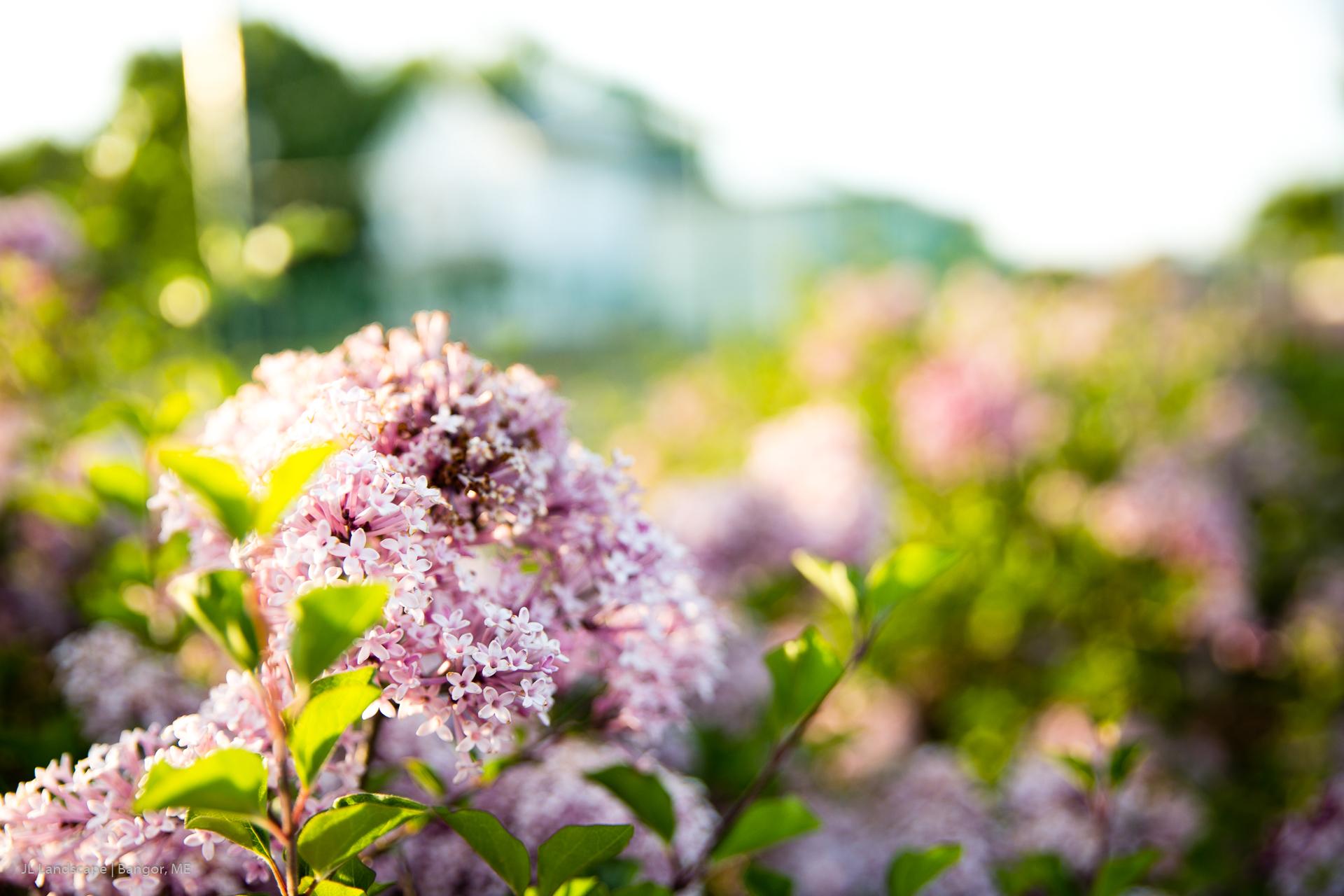 Jl Landscape Bangor Brewer Maine S Best Landscaping Solutions